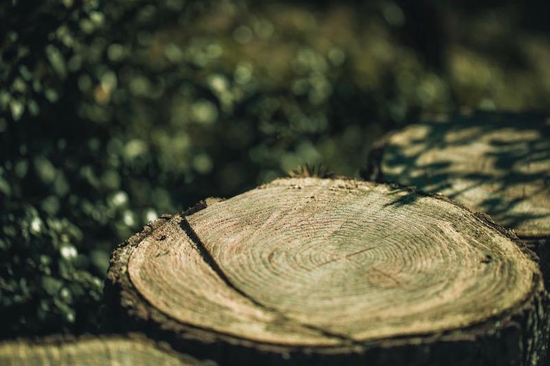 beneficios de la naturaleza lullivarriphotographer