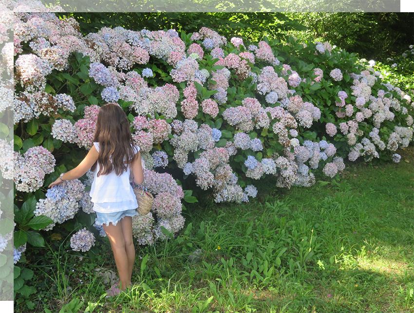 deco-naturaleza-primavera-asturias-hortensia