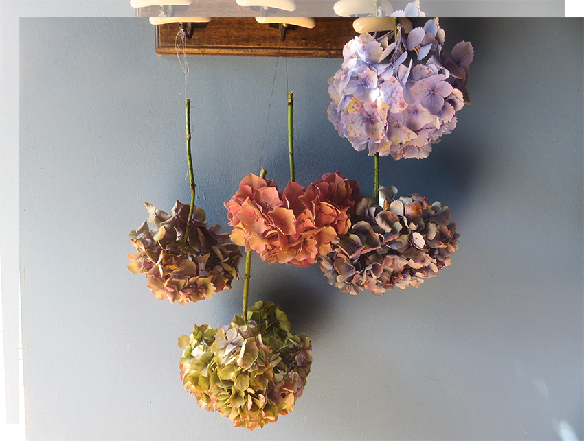 deco-naturaleza-primavera-asturias-secar-hortensias