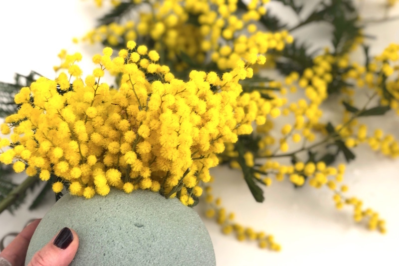 mimosa flor
